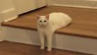 Kam se té kočce poděly nohy? Foto: