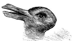 Kachna, nebo králík? Foto: