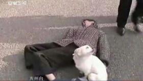 Pes zůstal u svého paníčka. Foto: