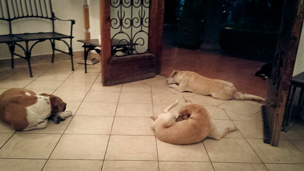 stray-dogs-pay-respects-funeral-animal-lover-margarita-suarez-yucatan-mexico-14 Foto: