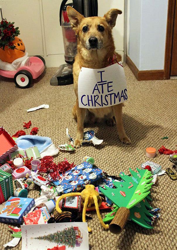 Snědl jsem vánoce Foto: