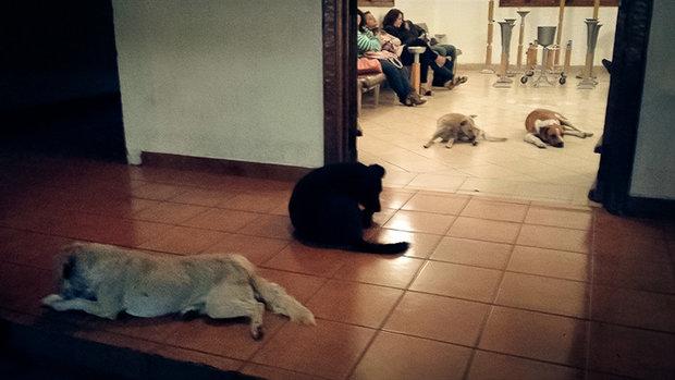 stray-dogs-pay-respects-funeral-animal-lover-margarita-suarez-yucatan-mexico-15 Foto: