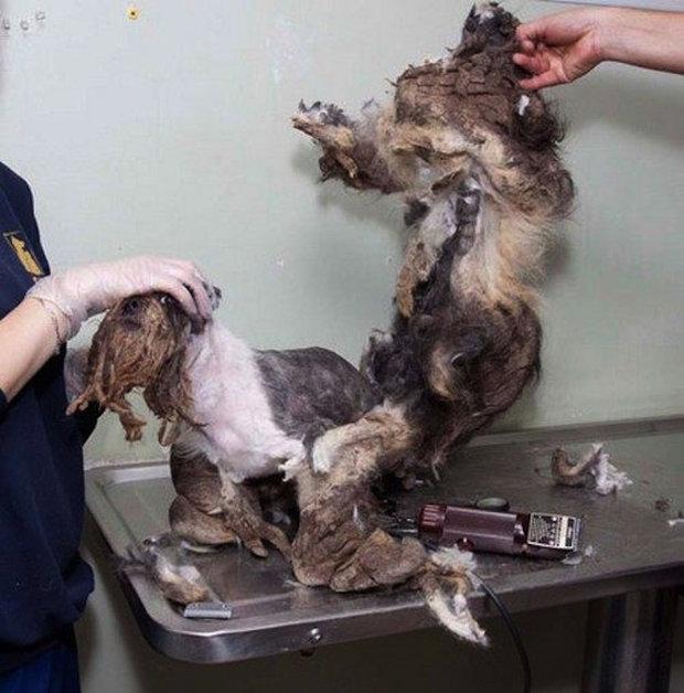 Chudák pes byl v opravdu zanedbaném stavu Foto: