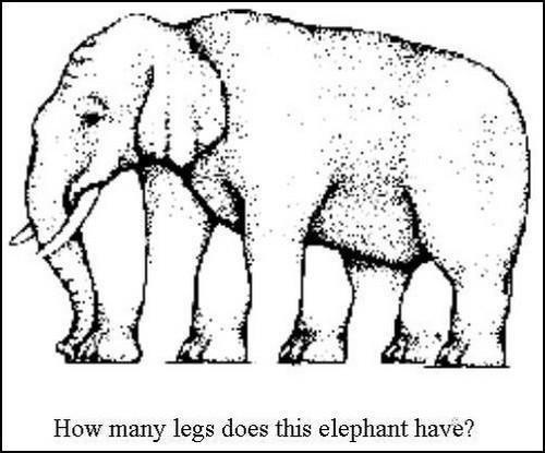Kolik má slon nohou? Foto: