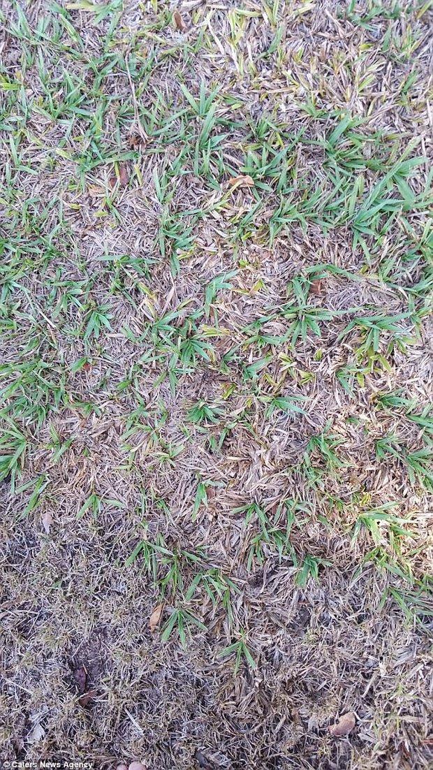 Pavouk ukrytý v trávě. Foto: